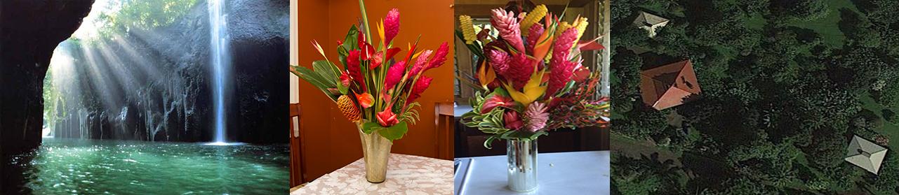 Maui's Best Flowers